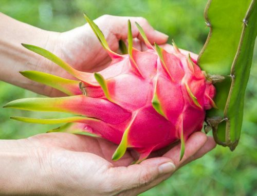 Top 5 Easy to Grow Fruit Trees