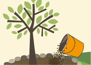 How to mulch a fruit tree