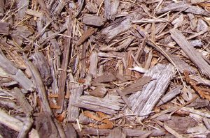 Wood chip mulch for fruit trees
