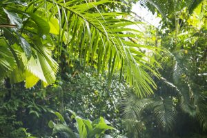 Fruit trees enjoy mulch