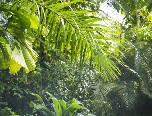 Rainforest Mulch for Better Plant Health